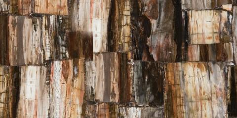 Petrified_Wood_ Retro